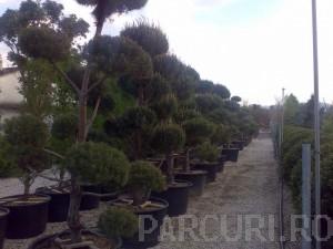 poza Plantari arbori, arbusti si flori de gradina in containere sau cu balot de pamant de 180 litri