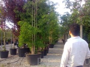 poza Plantari arbori, arbusti si flori de gradina in containere sau cu balot de pamant de 210 litri.