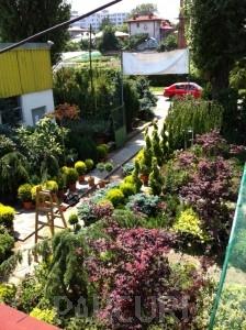 poza Plantari arbori, arbusti si flori de gradina in ghivece sau cu balot de pamant