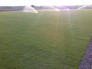 Galerie foto Probe si reglaje la sistemul de drenuri si la sistemul de irigatii ale terenului de fotbal