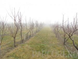 Poza Livezi de pomi fructiferi si plantatii de arbusti fructiferi