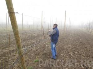 poza Taieri de formare, intretinere si fructificare la pomii fructiferi mici (inaltime 2 metri)