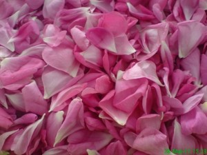Poza Trandafir pentru dulceata