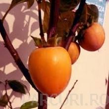 Poza  Pomi fructiferi exotici, Kaki (curmal japonez) (Diospyros virginiana).