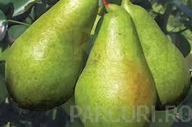 poza Peri soiul `Cure`. Puieti pomi fructiferi altoiti, cu radacina ambalata.