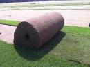 Rulouri de gazon Garden Turf