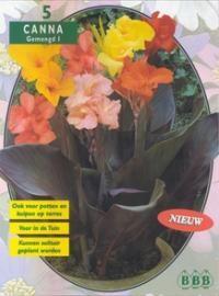 poza Bulbi flori perene de gradina, Canna ,varietati mixte, 3 rizomi/ pachet