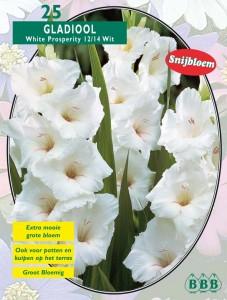 poza Bulbi flori perene Gladiole `White Propserity`, 5 buc/pachet