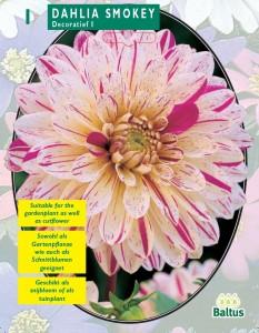 poza Bulbi flori de gradina Dalia Smokey (dalia), 1 radacina / pachet
