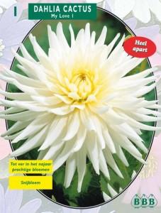 poza Bulbi de flori Dalie `Cactus My Love` (dalia) , 1 radacina / pachet