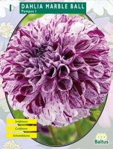 poza Bulbi flori Dalie glob, `Marble Ball`, ( dalia ) , 1 radacina / pachet