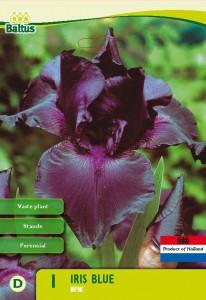 poza Bulbi flori de gradina Iris germanica Blue,3 rizomi / pachet
