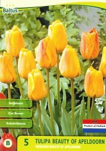 poza Bulbi de lalele Beauty of Apeldoorn, 5 buc./punga, galbene, portocalii