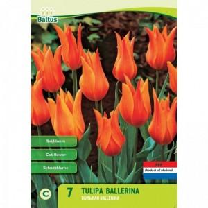 poza Bulbi de lalele Ballerina. 7 buc/punga, culoare portocalie