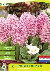 poza Bulbi de zambile, Pink Pearl, 3 buc/punga, culoare roz inchis, bulbi f mari, 16 cm