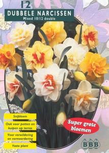 poza Bulbi de narcise floare dubla, mix,culori diferite , 5 buc/punga