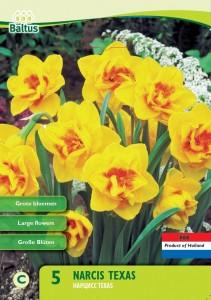 poza Bulbi de narcise mini Texas , 5 buc/punga, floare batuta, culoare galben cu centrul portocaliu