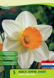 poza Bulbi de narcise Sempre Avanti, , 15 buc/punga, floare batuta, alb cu portocaliu