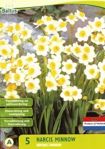 poza Bulbi de narcise Minnow,  5 buc/punga, floare crem cu galben