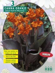 poza Bulbi flori primavara Canna `Oranje Bruin blad`, 3 rizomi/pachet.
