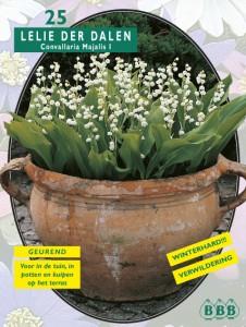 poza Bulbi flori gradina , margaritar, `Convallaria Majalis` ,25 rizomi/pachet