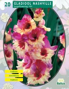 poza Bulbi flori primavara gladiole  'Gladiolus Nashville'  gladiole, 20 bulbi/pachet