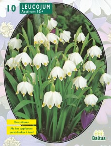 poza Bulbi flori gradina , ghiocei, `Leucojum`, 10 bulbi/pachet