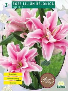 poza Bulbi flori primavara Lilium `Belonica`, pachet 3 bulbi