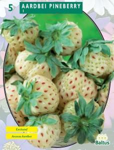 poza Capsuni stoloni, soiul `Aardbei Pineberry`  fructe albe, 5 stoloni/pachet
