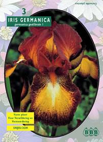 poza Bulbi flori primavara , Iris `Geel Bruin`, 3 rizomi /pachet