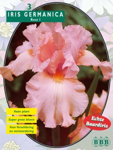 poza Bulbi flori gradina `Iris Germanica Rose`, 3 rizomi/pachet.