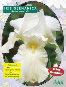 poza Bulbi flori primavara  Iris Germanica `Wit` , 1 rizom/ pachet