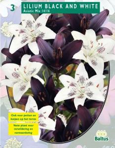 poza Bulbi flori de gradina  Lilium `Black and White`, 3 bulbi crin/pachet