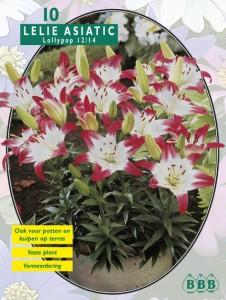 poza Bulbi flori  de gradina Lilium `Lollypop`, 10 bulbi crin/ pachet