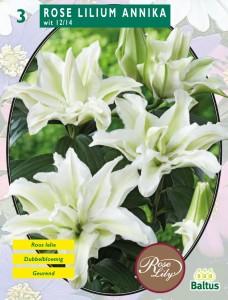 poza Bulbi flori gradina Rose Lilium `Annika`,3 bulbi/ pachet
