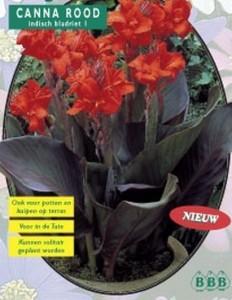 poza Bulbi flori perene, `Canna Rood` , frunze de culoare rosu inchis, 3 rizomi/pachet