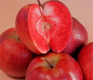 poza NOU! Meri soiul ' Red Love'  Pomi fructiferi puieti altoiti, cu radacina ambalata.