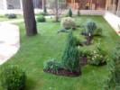Gradina mica, amenajare cu plante si gazon pentru curtea interioara a unui hotel din Bucuresti.