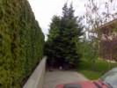 Gard viu, perdea de arbusti sau plante cataratoare cu frunze evergreen sau frunze cazatoare